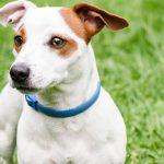 ¿Cuánto cuesta castrar un perro?
