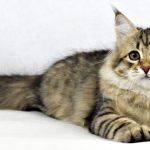 ¿Cuánto cuesta esterilizar una gata?